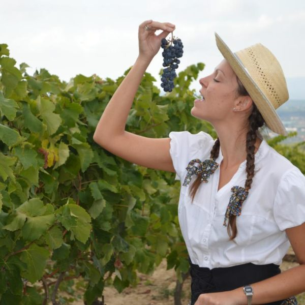Taller de viñas y vendímia - 1