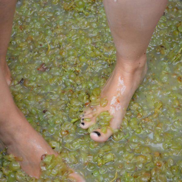 Taller de viñas y vendímia - 3