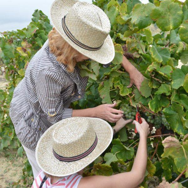 Taller de viñas y vendímia - 4