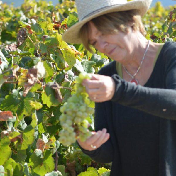 Taller de viñas y vendímia - 5