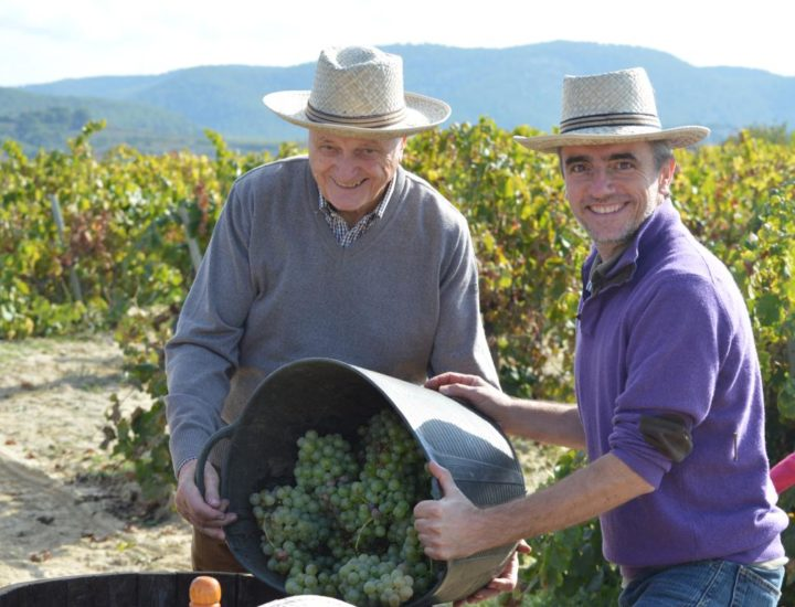 Taller de viñas y vendímia