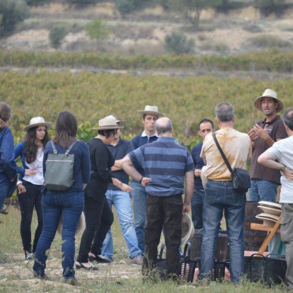 Taller de viñas y vendímia - 11