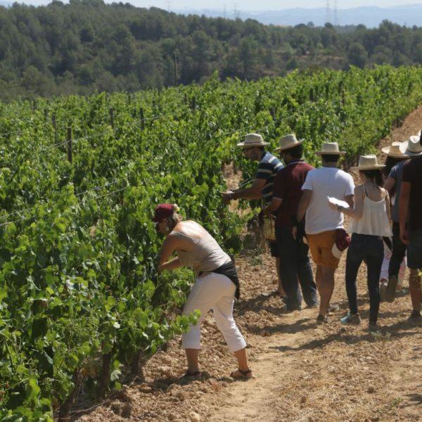 Taller de viñas y vendímia - 13