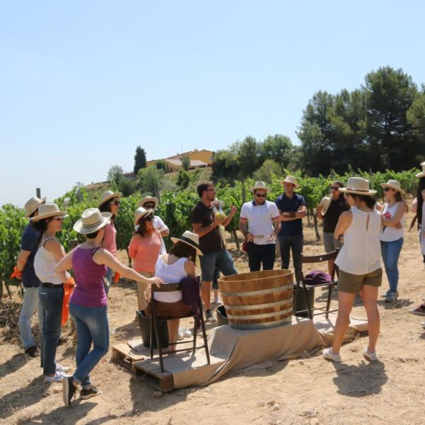 Taller de viñas y vendímia - 14