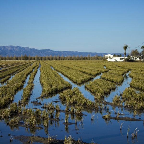 Preservación Delta del Ebro