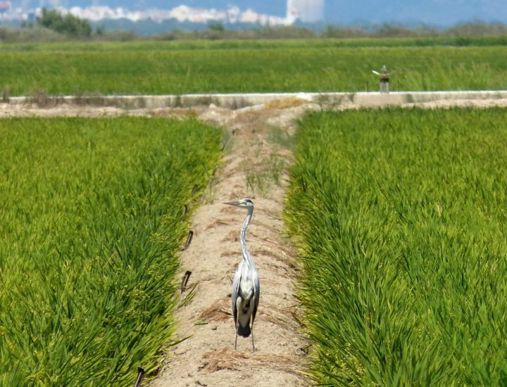 Acciones de preservación del Delta del Ebro