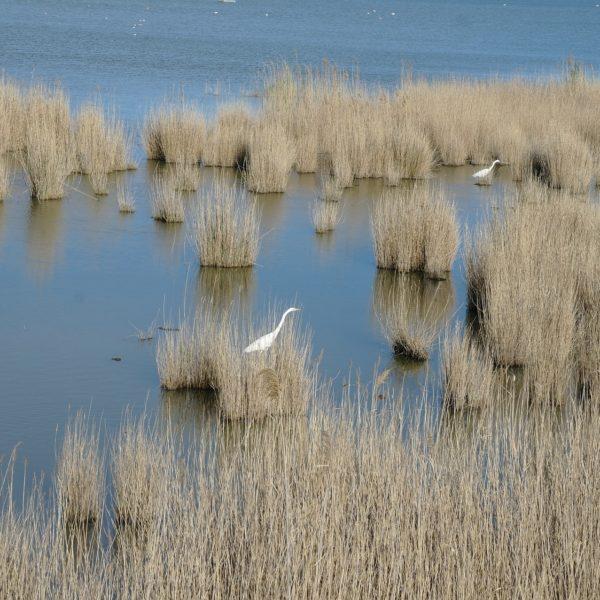 delta delta del ebro ave